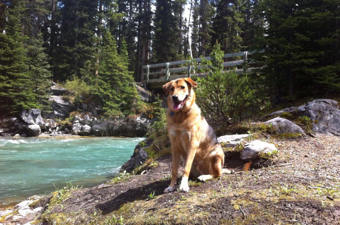 Banff Pet Friendly Hotel