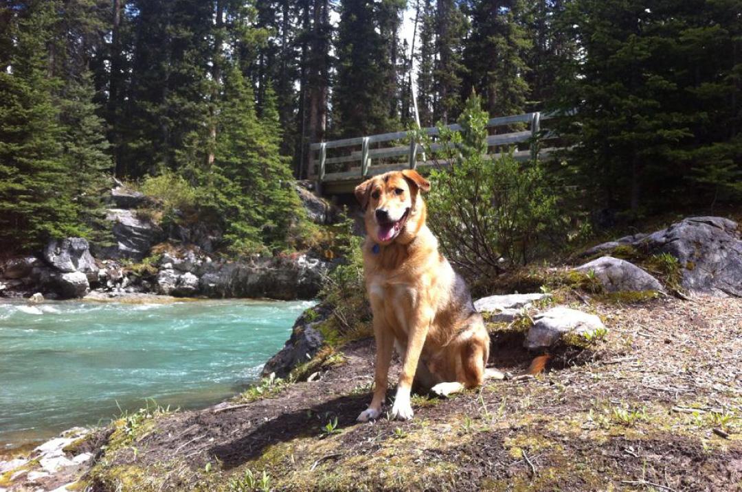 Banff Pet Friendly Hotel